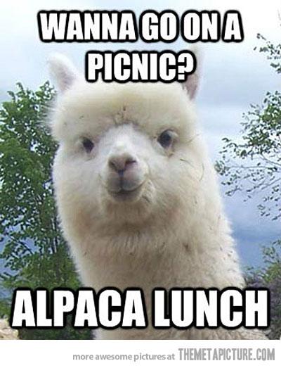 funny-alpaca-pun-picnic