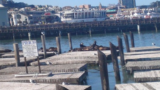 The sealions at Pier 39