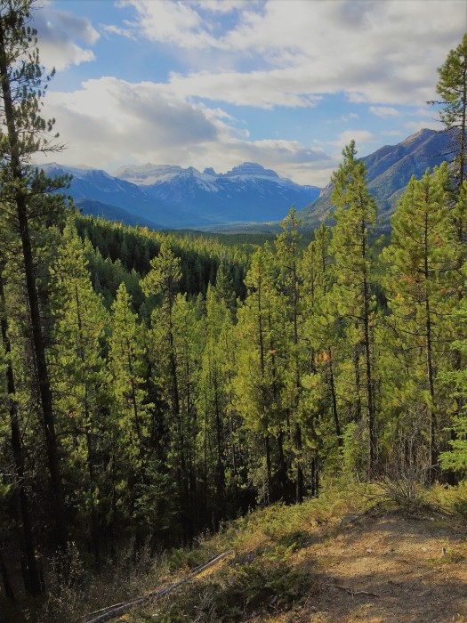 The view from Sundance Canyon - forest and mountain as far as the eye can see