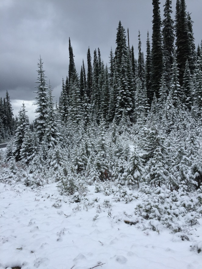 A snowy forest scene on the slopes of Mount Revelstoke
