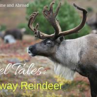 Travel tales: A Runaway Reindeer